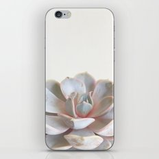 Pink Succulent iPhone & iPod Skin