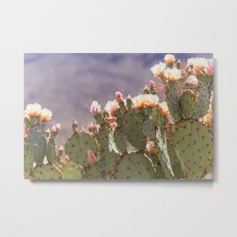 Prickly Pear Blooms I Metal Print