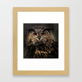 The old eagle owl Framed Art Print