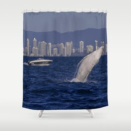 Humpback Whale Calf Breaching Off Surfers Paradise Shower Curtain