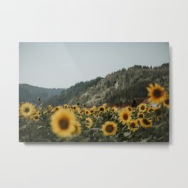 German sunflower field near mountain   Colourful Travel Photography   Waldkirch/Freiburg, Germany (Europe) Metal Print