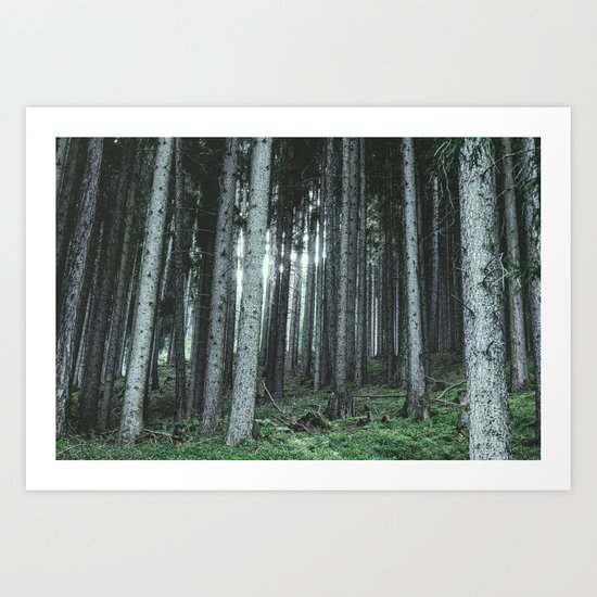 Woodland, Forest, Trees Art Print