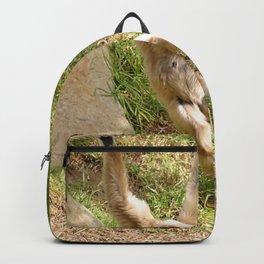 White Handed Gibbon Backpack