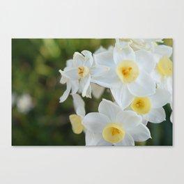 Daffodil Dream  Canvas Print