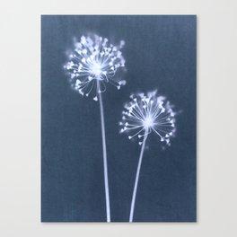 Indigo Dandelion Botanical Cyanotype Canvas Print