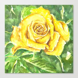 Yellow Rose Watercolor Painting Canvas Print