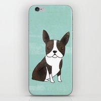 boston terrier iPhone & iPod Skins featuring Boston Terrier by 52 Dogs