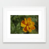 rileigh smirl Framed Art Prints featuring Orange Flower by Rileigh Smirl