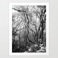 Rainforest No.8 Art Print