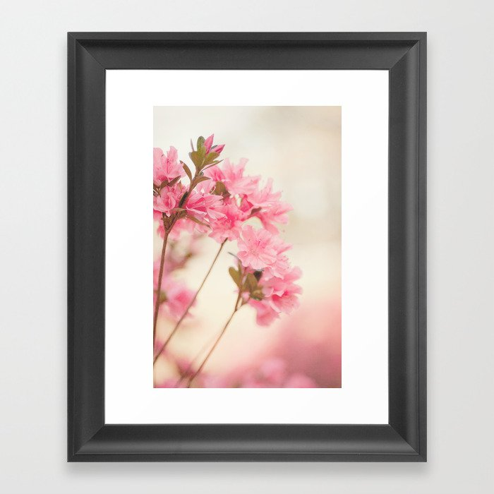 Pink Azaleas Framed Art Print