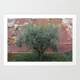 Rome, Olive tree in the Park Art Print