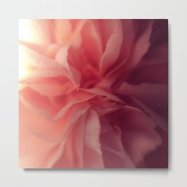 Carnation Close Up Metal Print