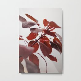 Red leaves in a London Fog by Diana Eastman Metal Print