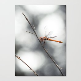 Dragonfly_7c Canvas Print