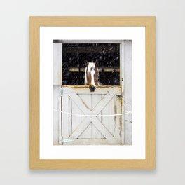 Snow Stall Horse Framed Art Print