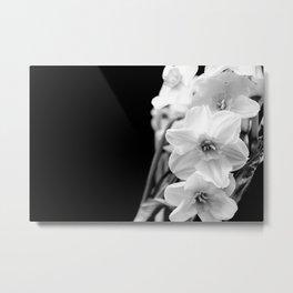Daffodils in B&W Metal Print
