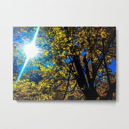 Sunlit Leaves Metal Print