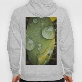 Raindrops on a green leaf Hoody