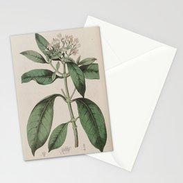 Flower 119 webera corymbosa Perfumed Webera20 Stationery Cards