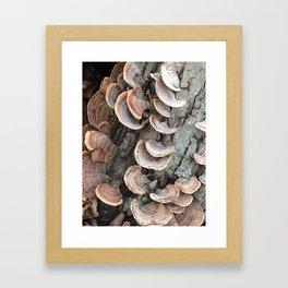Fungi III Framed Art Print