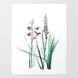 Festive Gouache Watercolor Watsonia Plant Art Print