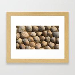 The World of Shells Framed Art Print