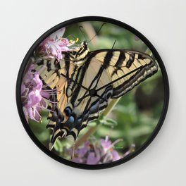 Western Tiger Swallowtail on Lemon Blossoms Wall Clock