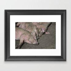 Three little piggies  Framed Art Print