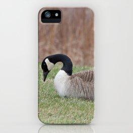 Goose Sitting iPhone Case