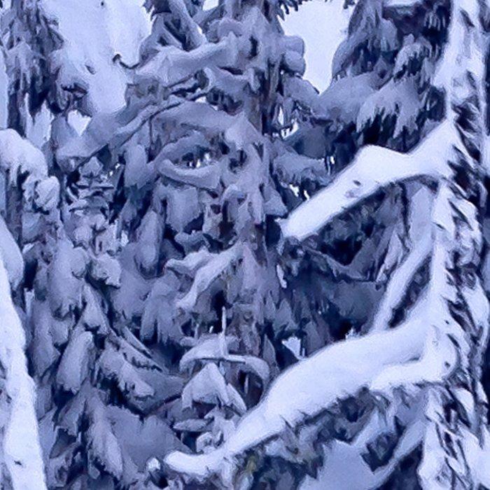 Snow Trees  Leggings