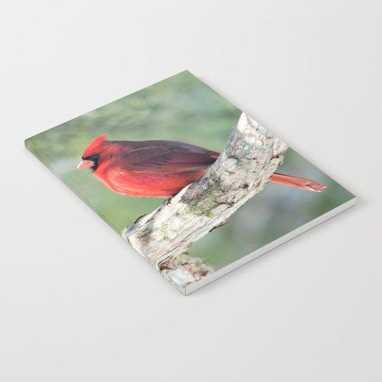 Serene Cardinal Notebook