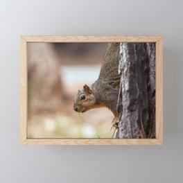 fox squirrel (Sciurus niger) Framed Mini Art Print