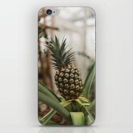 Pineapple Plant iPhone Skin