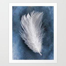 Feathers & Clouds Art Print