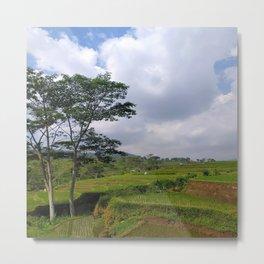 Terracing Rice Field in the countryside Metal Print