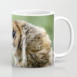 Brecon Owl Coffee Mug
