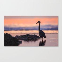 A Great Blue Heron Sunset at Cape Cove Beach Cape Perpetua, Oregon Canvas Print