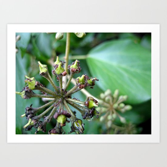 Ants on Plants Art Print