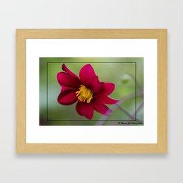 Lovely Red Framed Art Print