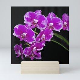 Graceful spray of deep pink orchids Mini Art Print