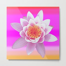 Ninfea Rose Metal Print