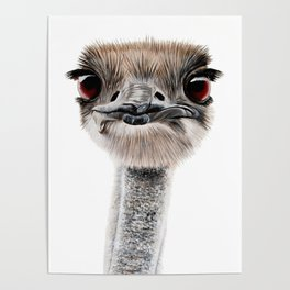 Emu art painting Poster