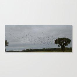 Black birds at flight Canvas Print