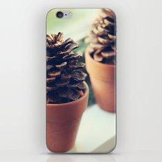 pinecones in the window iPhone & iPod Skin