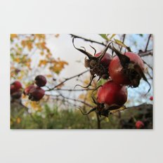 Autumn Rosehip Canvas Print