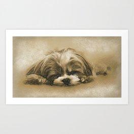 Sweet Dreams - Shih Tzu Puppy Sleeping Art Print