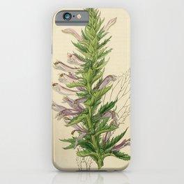 Flower 1842 lobelia decurrens Winged stemmed Lobelia20 iPhone Case