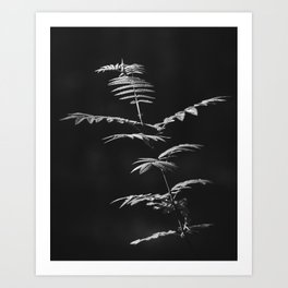 Nature Shots in Black and White. || Shadows. Forests. || Leaves. || Brunches. || Latvia. || Latvia Art Print