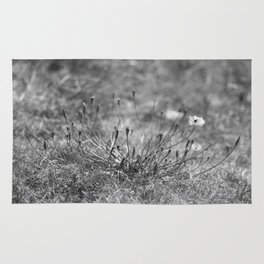 Beautiful black and white nature photo postcard Rug