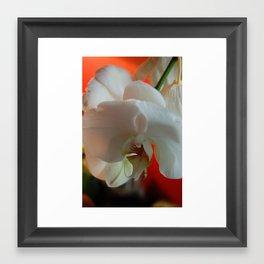 Falling Orchids 2 Framed Art Print